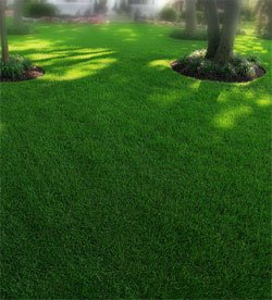 A Good Defense Is The Best Offense For Beautiful Lawn