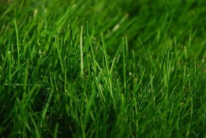 Green_Grass