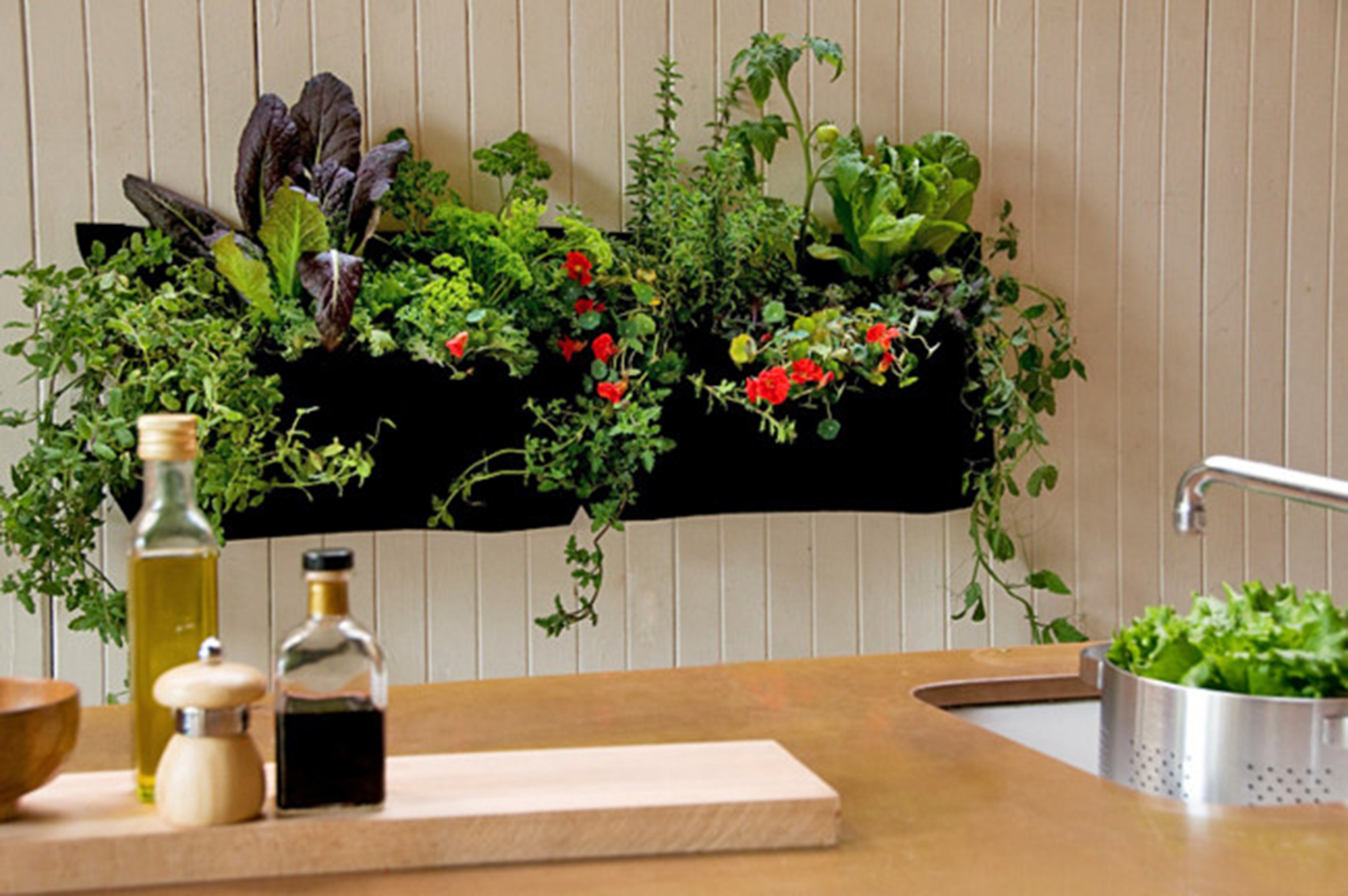 How to Grow an Indoor Garden - Cache Valley Family Magazine