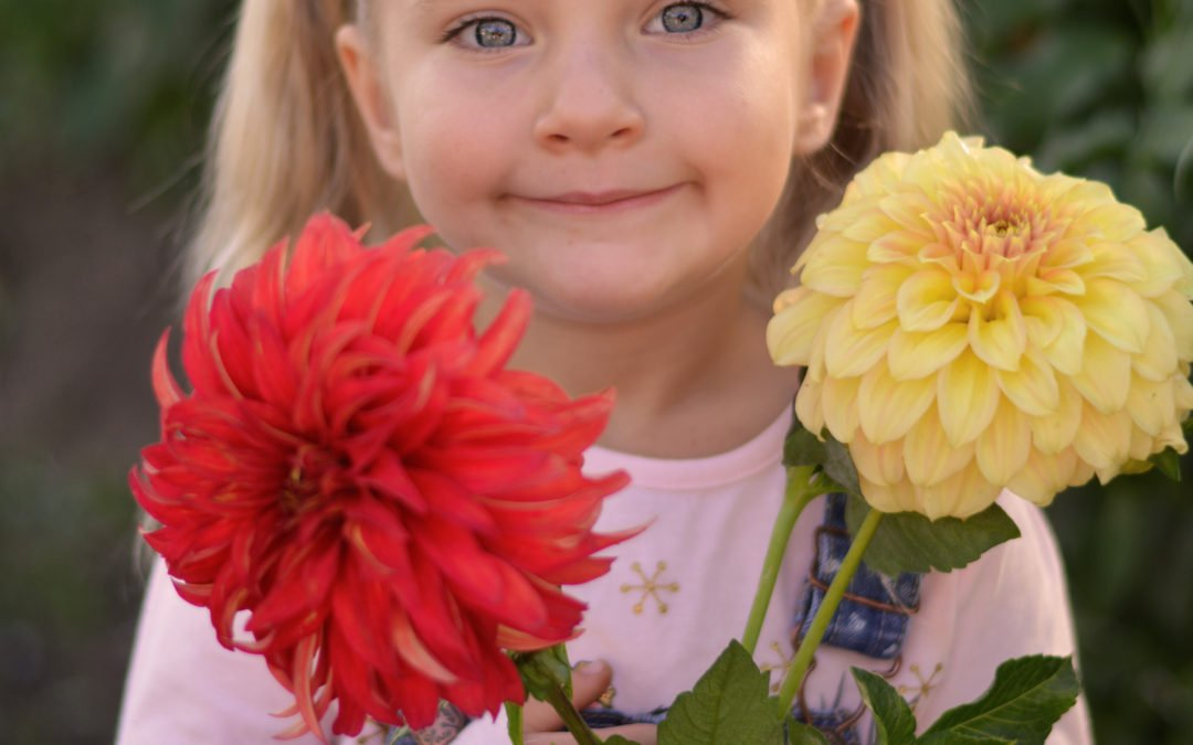 Local Couple Makes Growing Dahlias Simple