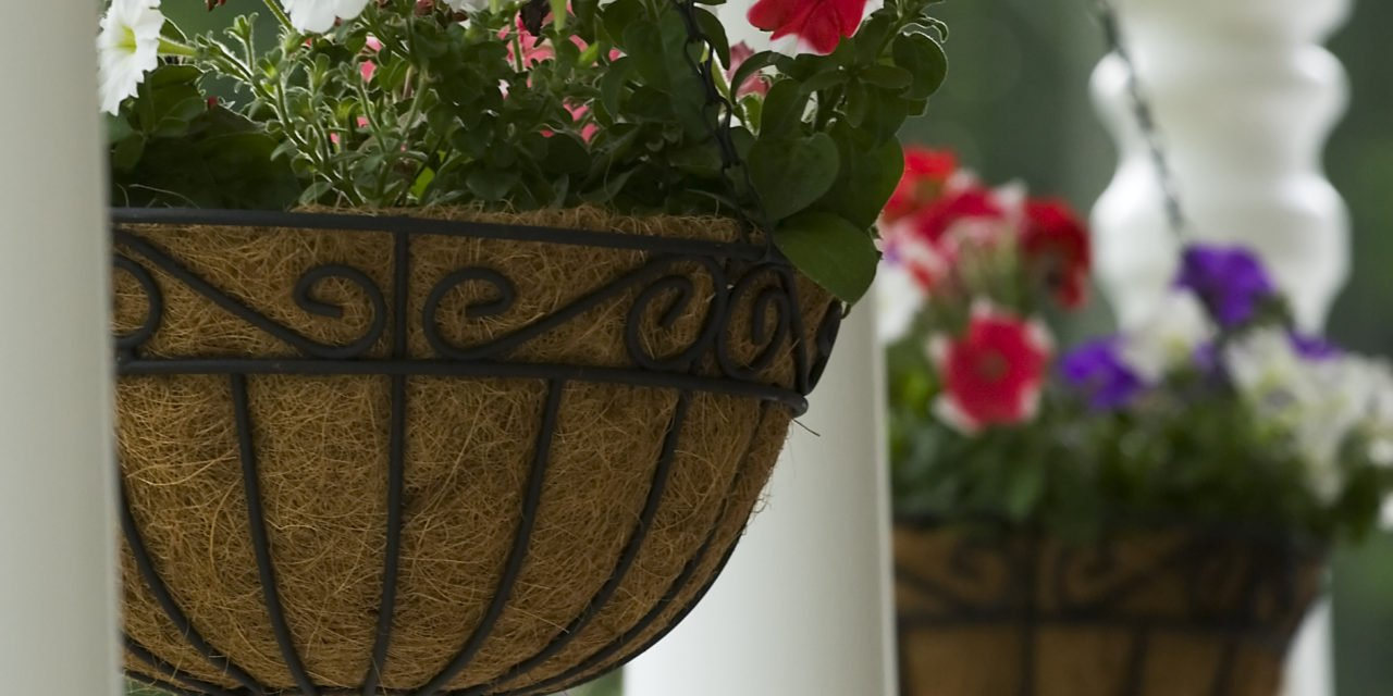 Secrets to Successful Hanging Baskets and Planters