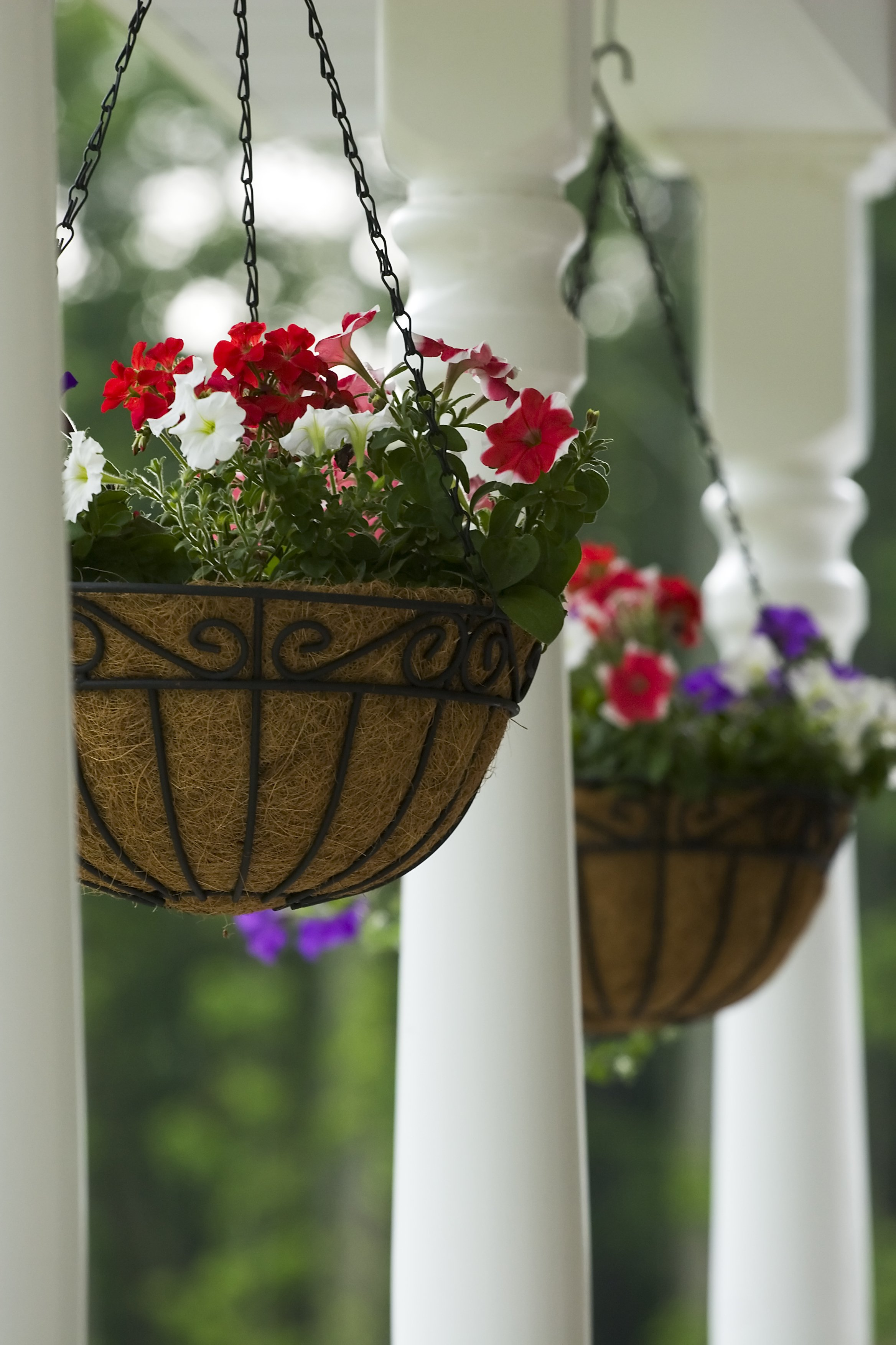 Secrets to Successful Hanging Baskets and Planters - Cache Valley ...