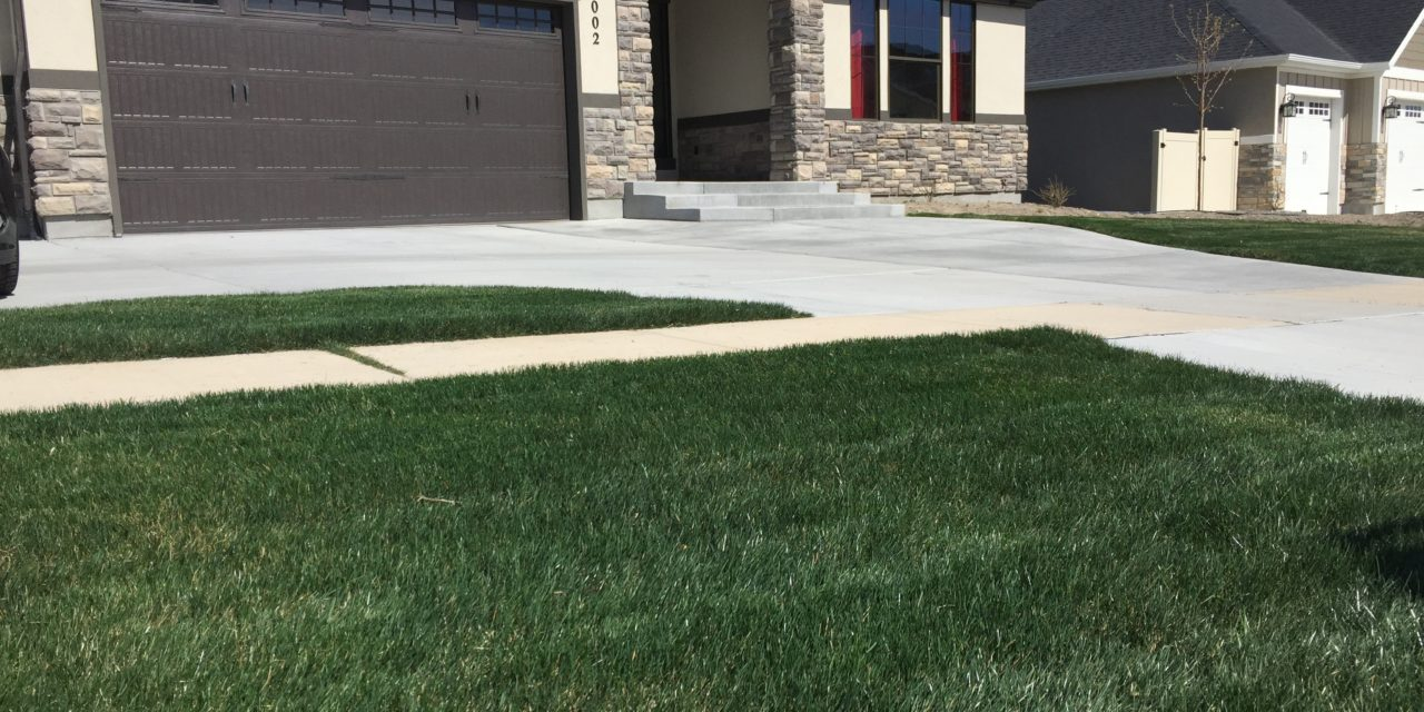 Planting New Lawn