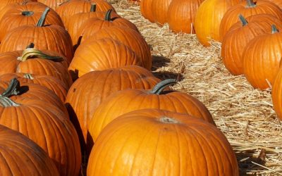 Fun Things to Do in Cache Valley During the Fall