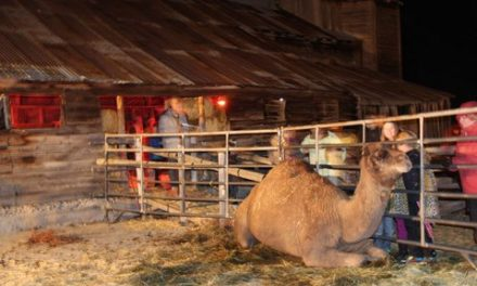 Local Resident Brings Community Together with Live Nativity