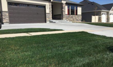 Planting New Lawn