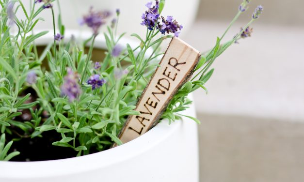 Natural Wood Plant Markers