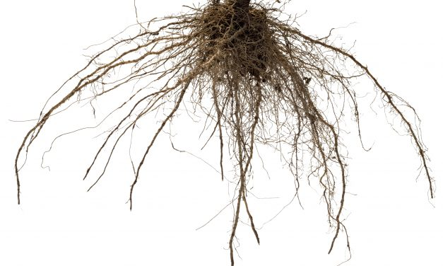 A Step-by-Step Guide to Bare Root Planting